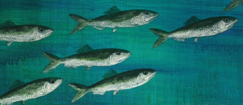 Herring (detail of painting by Robi Smith)